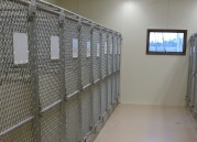 Kennel-pic-179x300.jpg