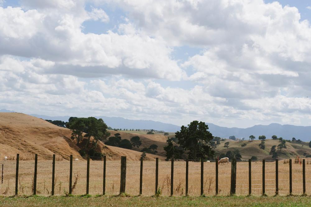 New_Zealand_Katie_Noble025.jpg