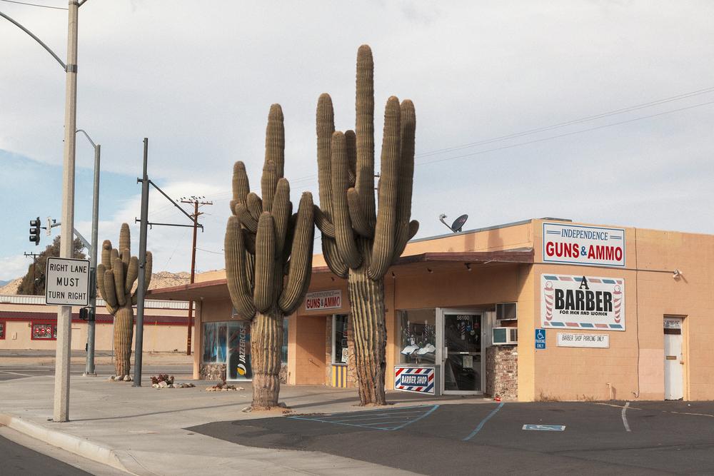 cactus_PortraVC.jpg