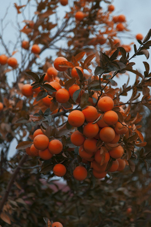 Orange_PortraVC.jpg