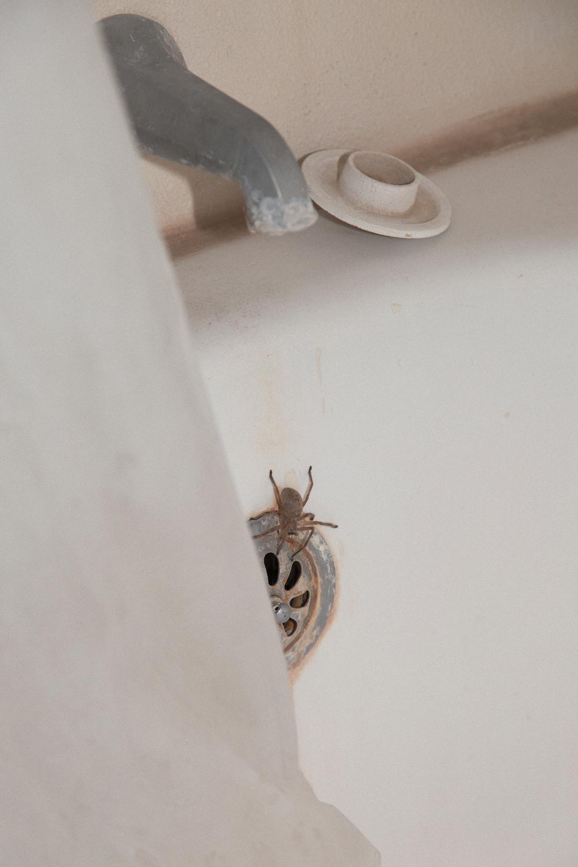 Spider_Portra.jpg