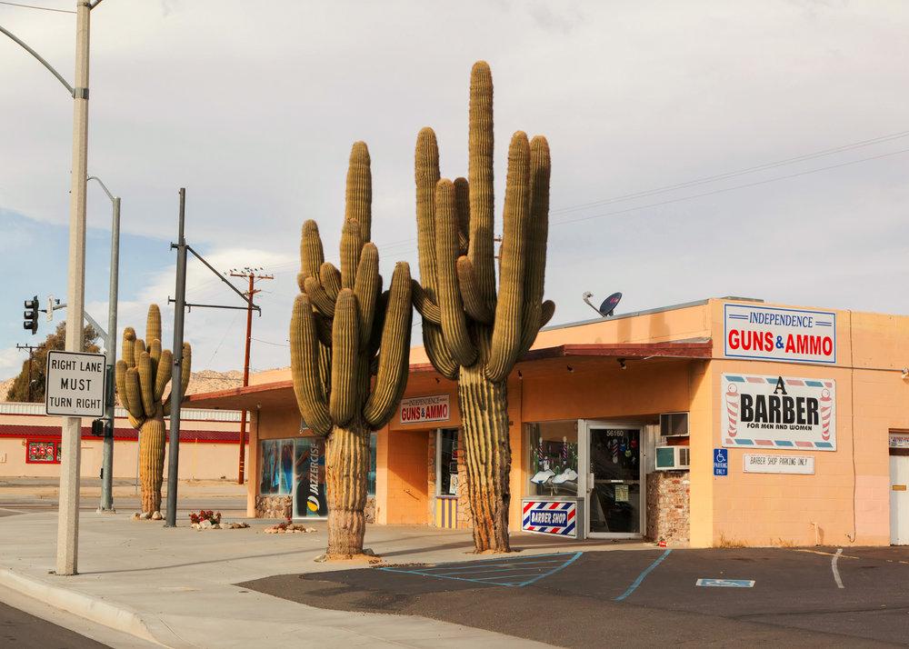 cactus_10Inches.jpg