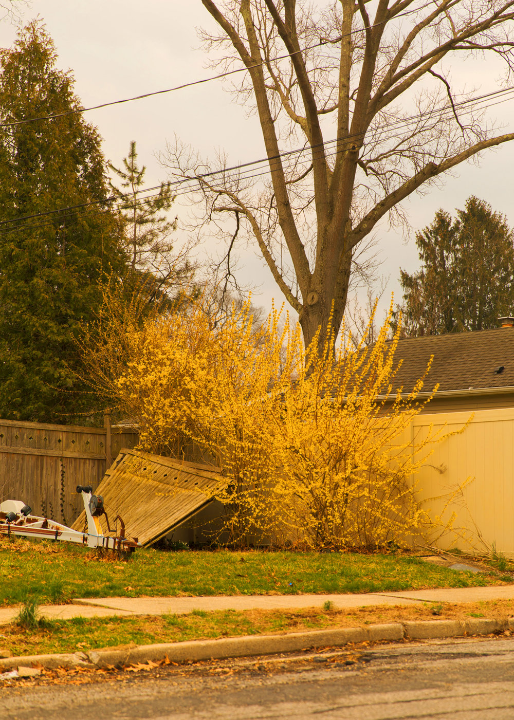 YellowTree_10in.jpg