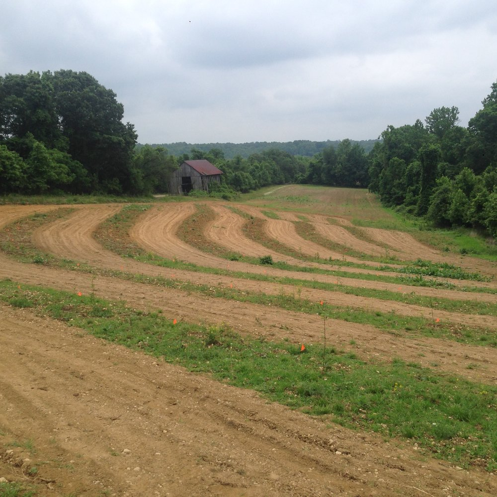 Spring 2017 photo of new planting that season prior to tube placement