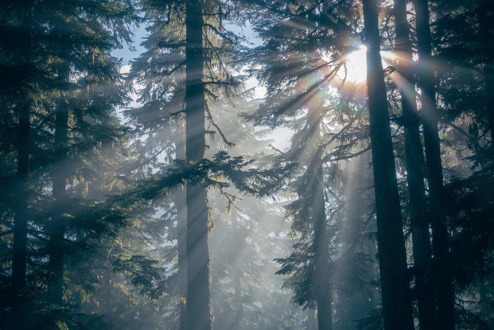 forest-1868136_1920.jpg
