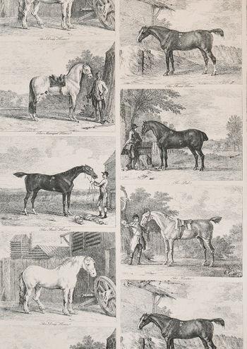 GILPIN-HORSES-Black-fullshot-A4-med-res.453d3ecb.jpg