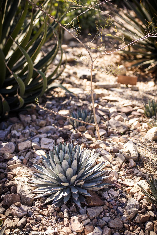 Nichole-Diehm-Photography-Tucson-Arizona-181.jpg