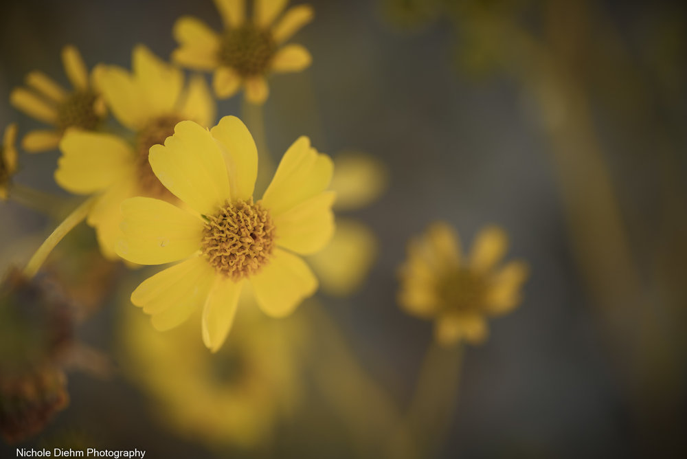 Nichole-Diehm-Photography-Tucson-Arizona-187.jpg