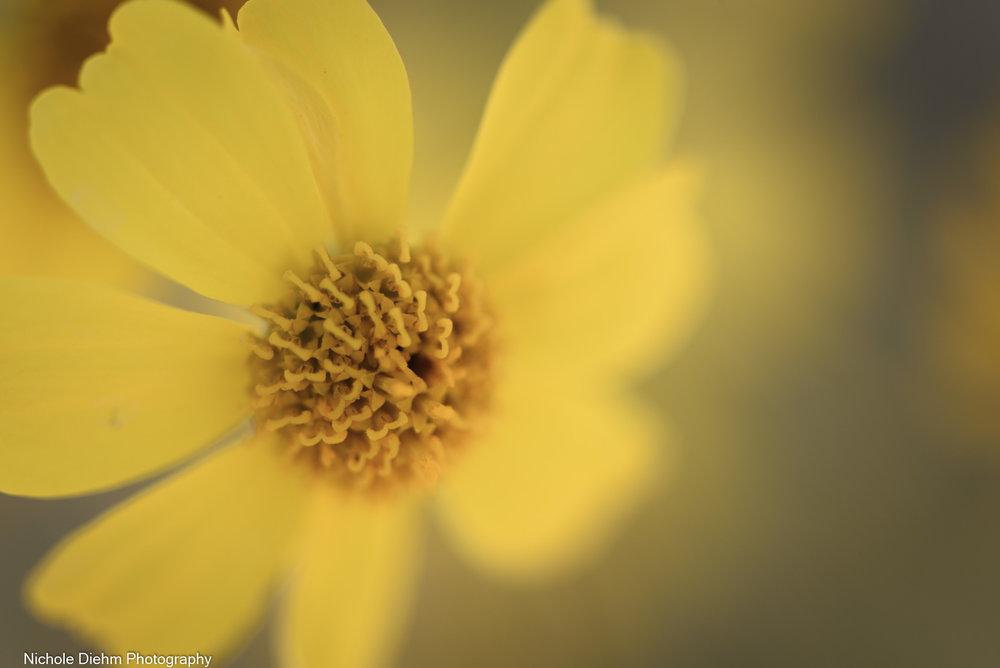 Nichole-Diehm-Photography-Tucson-Arizona-188.jpg
