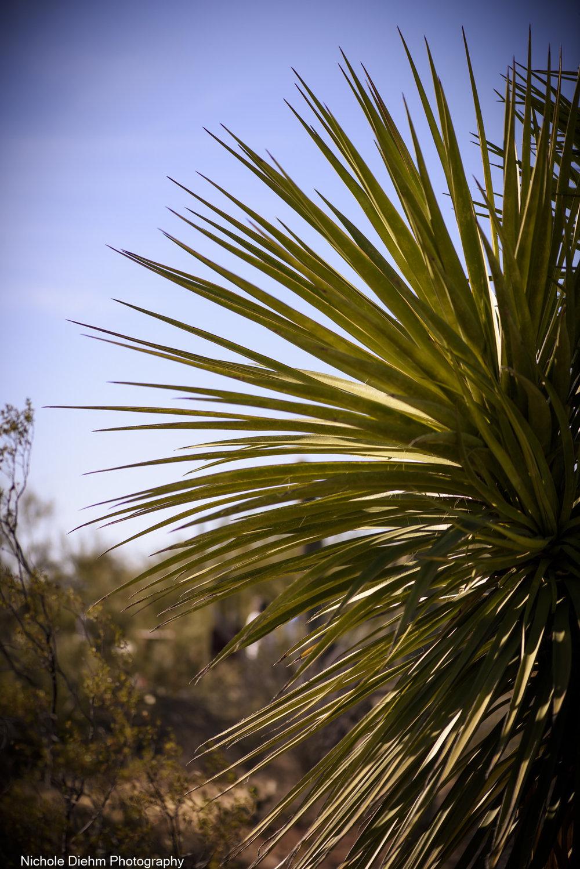 Nichole-Diehm-Photography-Tucson-Arizona-194.jpg