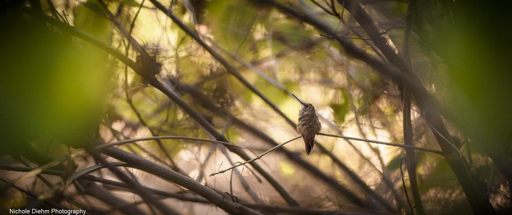 Nichole-Diehm-Photography-Tucson-Arizona-200.jpg