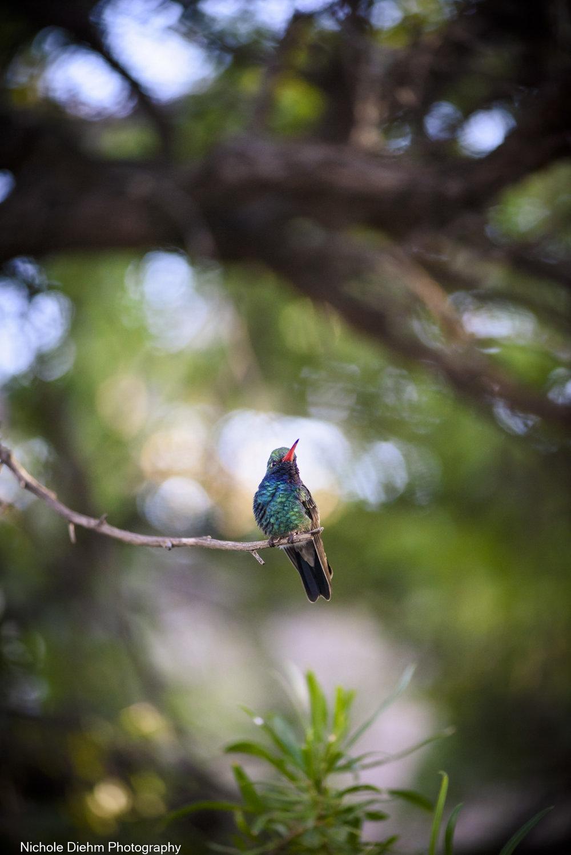 Nichole-Diehm-Photography-Tucson-Arizona-215.jpg