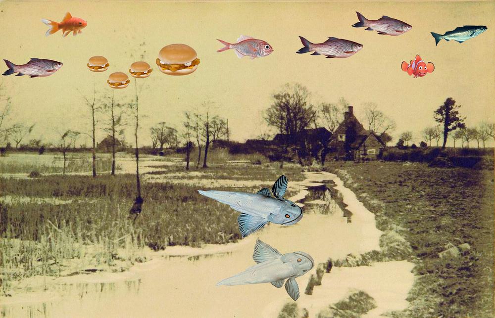 Fish, 2015