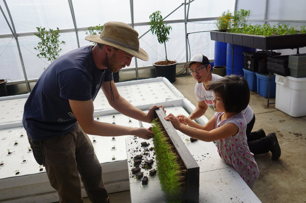 Nathan also works as a youth educator teaching kids about agriculture. Here, he shows how to remove dill seedlings to transplant to a deepwater culture bed.