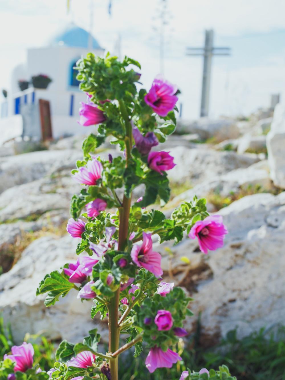 athens-greece-photo-diary-3-07