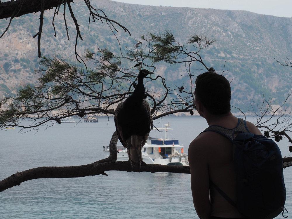 lokrum-island-dubrovnik-croatia-30