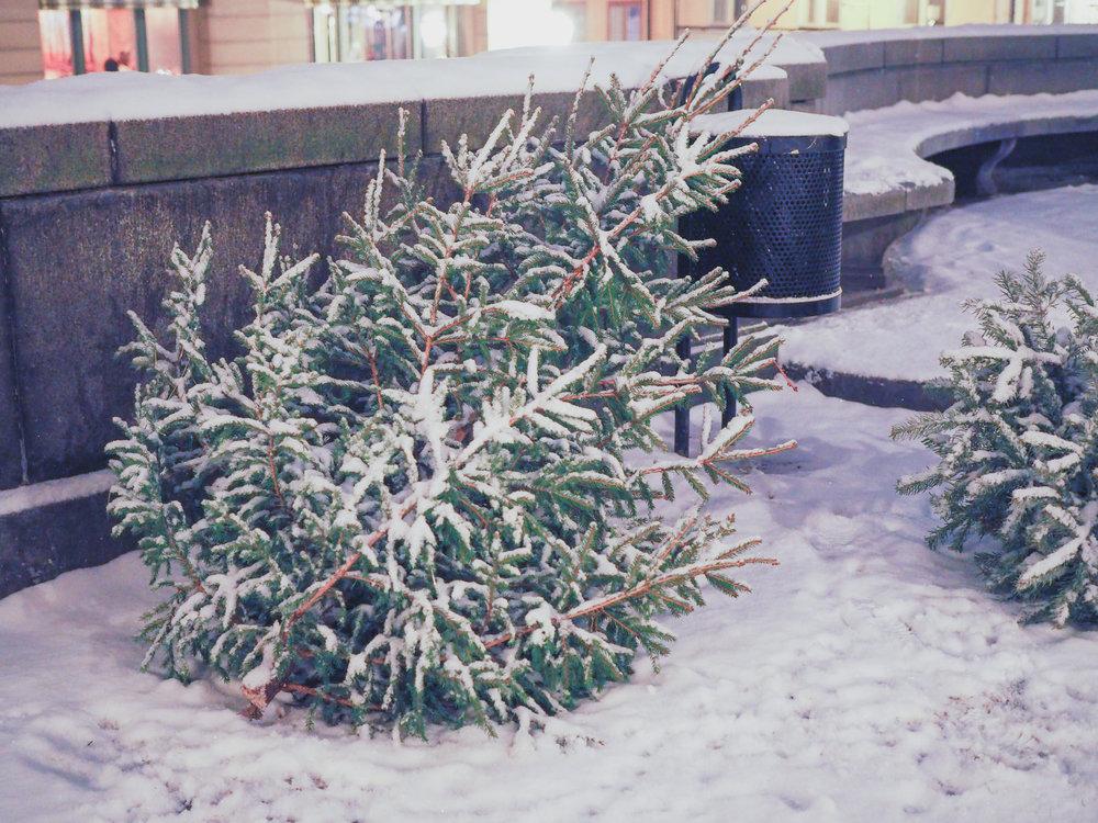 winter-stockholm-sweden-14