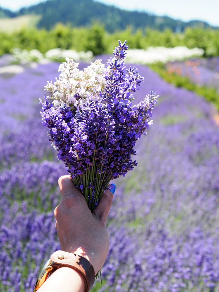 Lavender bundle from Hood River Lavender Farm, day trip from Portland