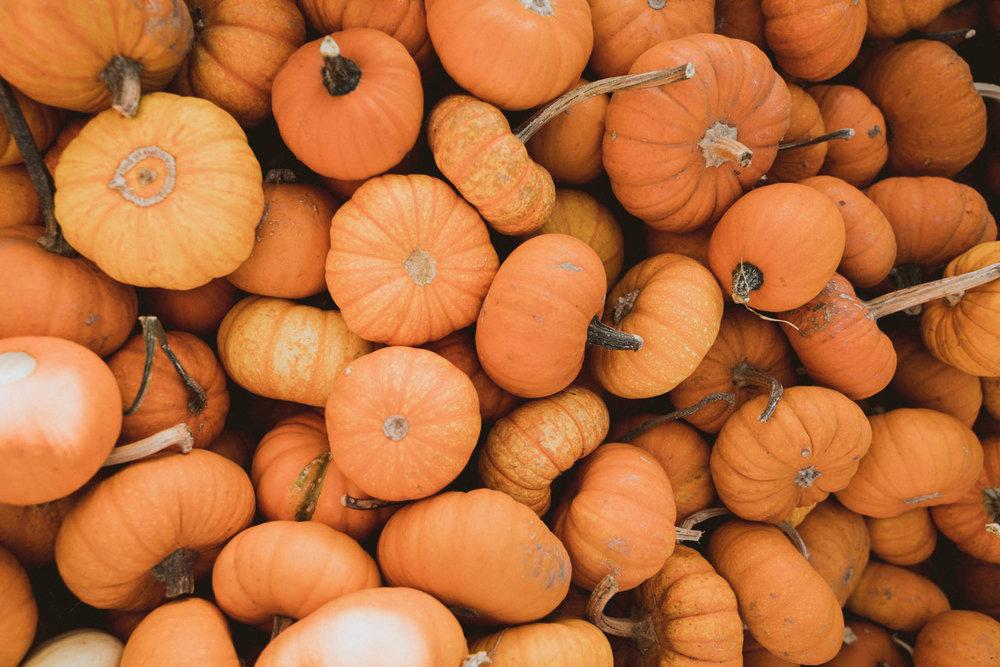Crate of pumpkins in Half Moon Bay