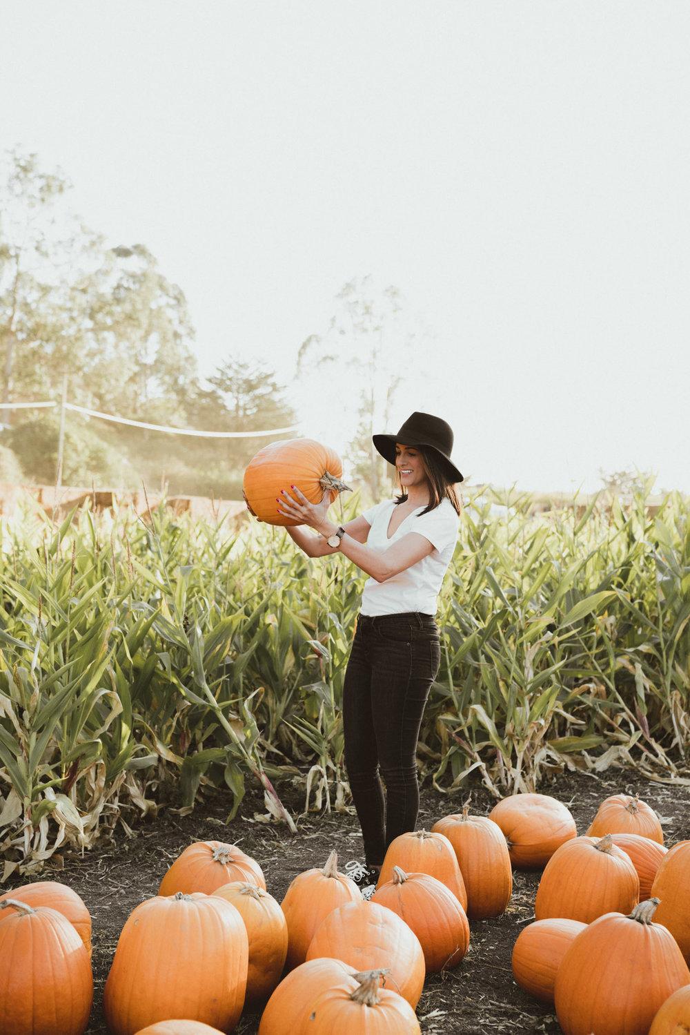 Selecting pumpkins at farm in Half Moon Bay, California