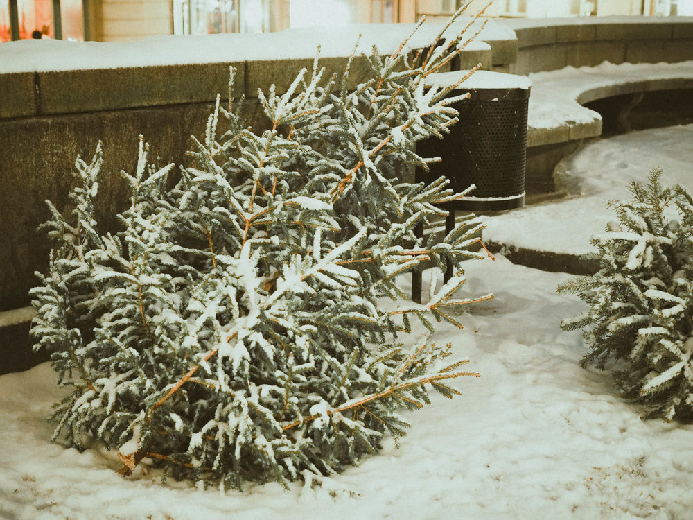 Snow-covered Christmas tree in Stockholm
