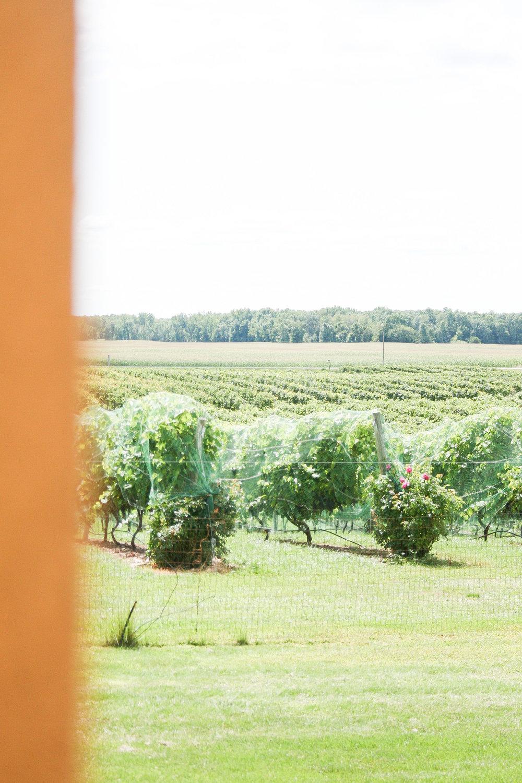 Parallel 44 Vineyard and Winery Milwaukee Wisconsin Tremaine Ranch Wedding Event Tableware Vintage Rentals Arizona5.jpg
