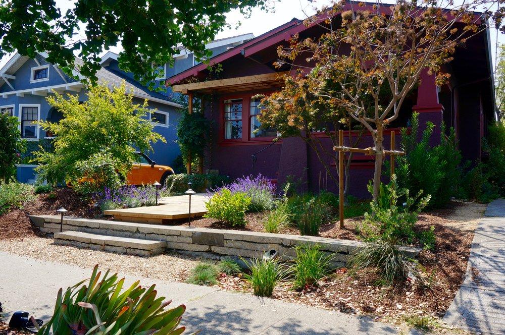 Front Yard Rain Garden in Alameda
