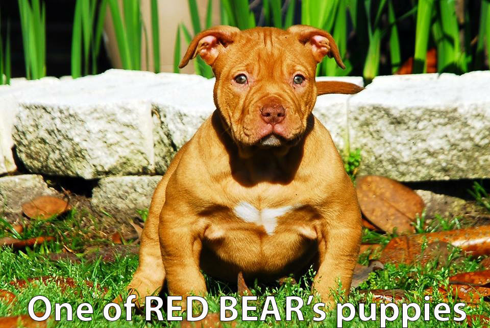 Some Of Red Bears Productions Biggest Bullies
