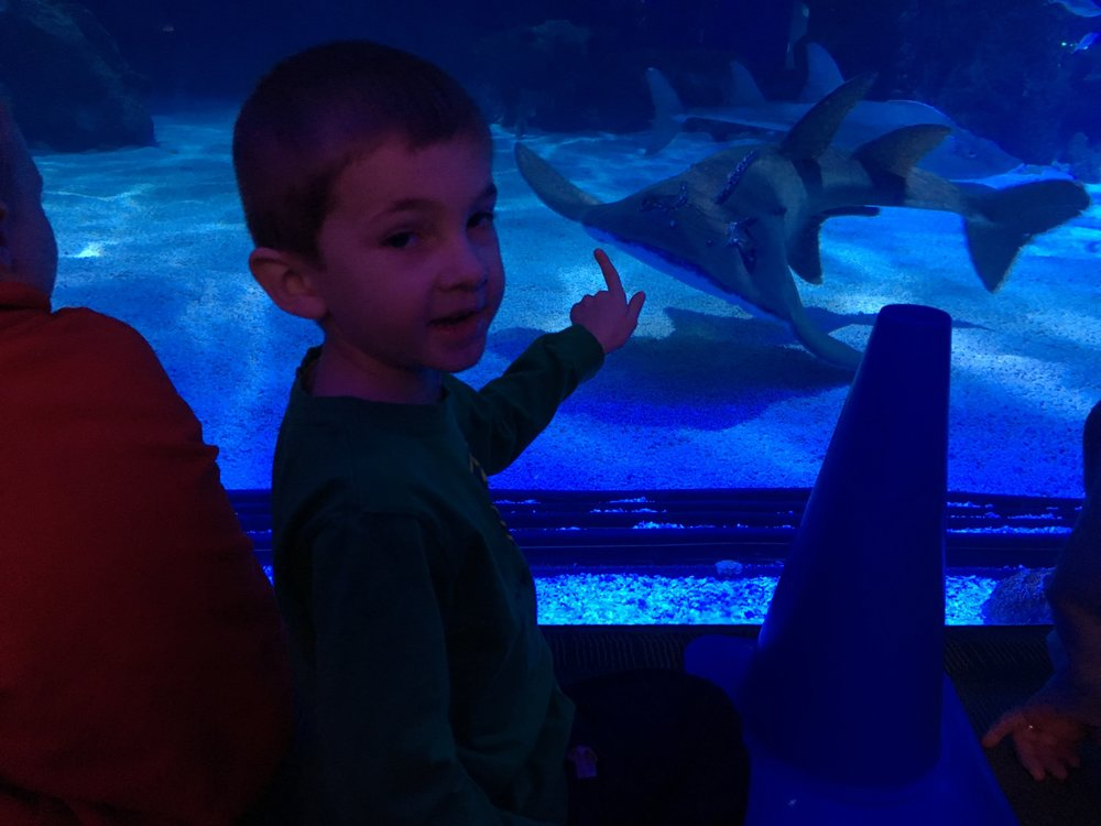 That's not a Dory fish, son. That's a shark.