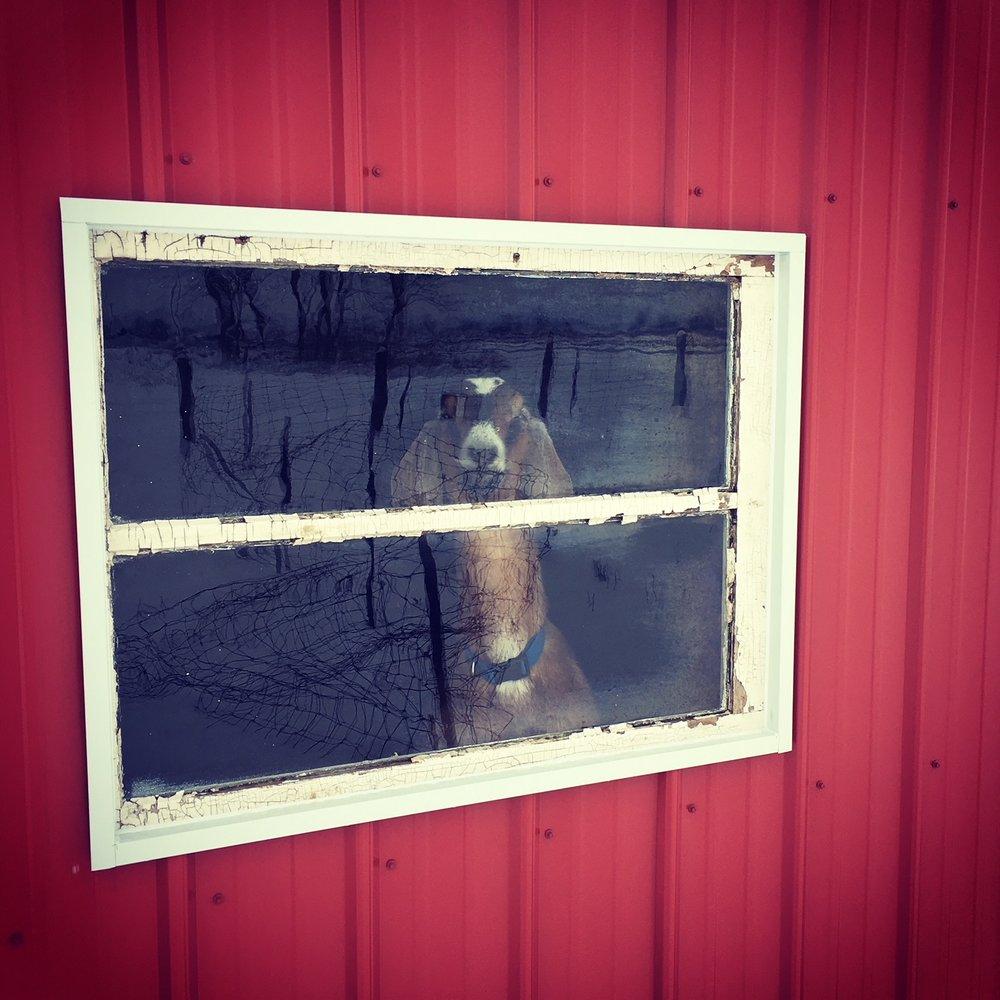 Where's my food, chump?