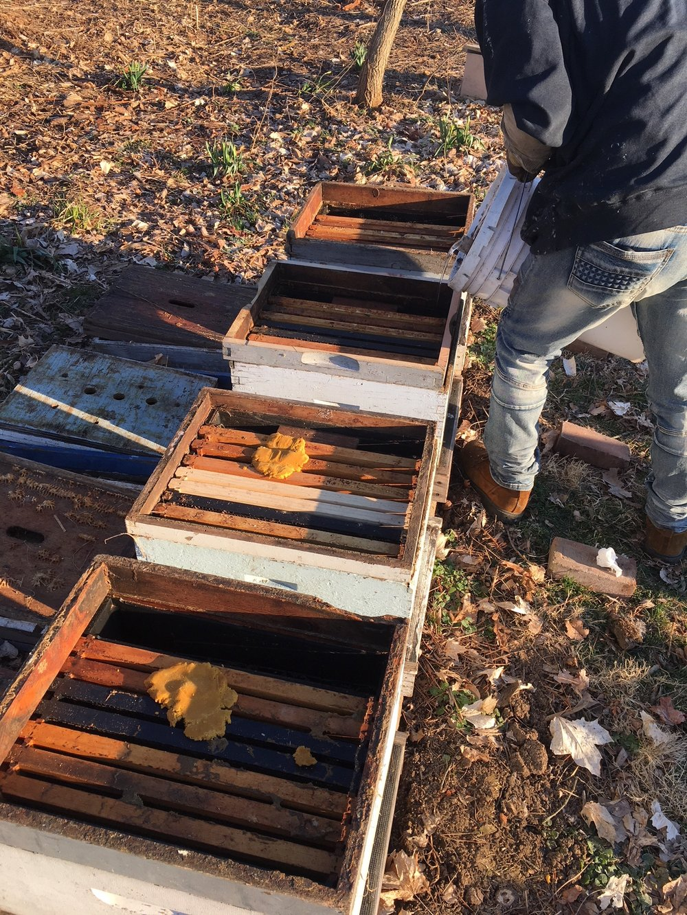 Prepping the hives. A little protein, a little syrup.