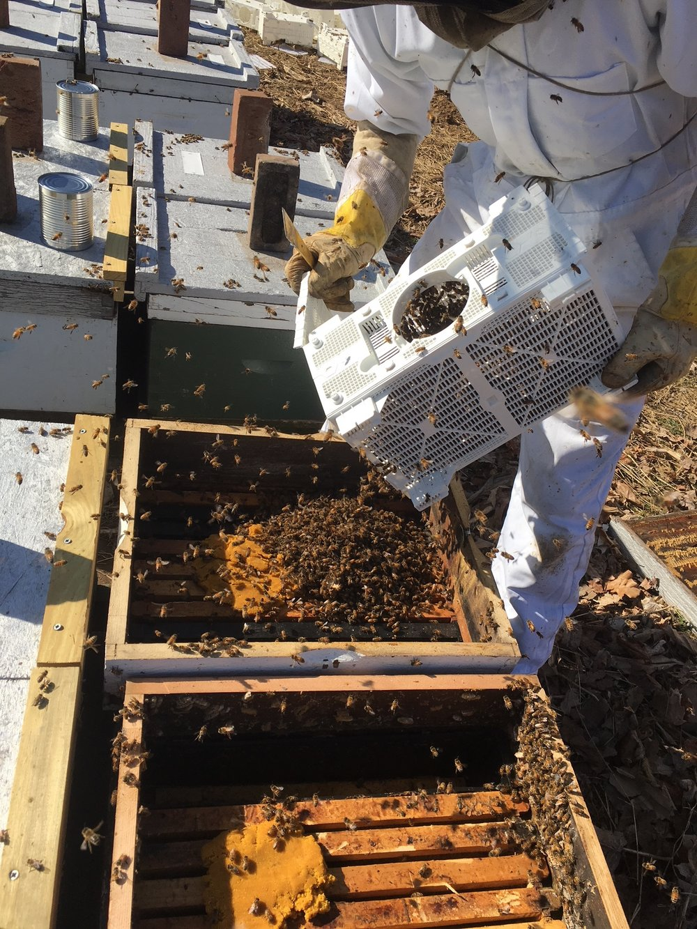 Take the can of syrup out and shake the bees in. (About three pounds) A spacer helps…