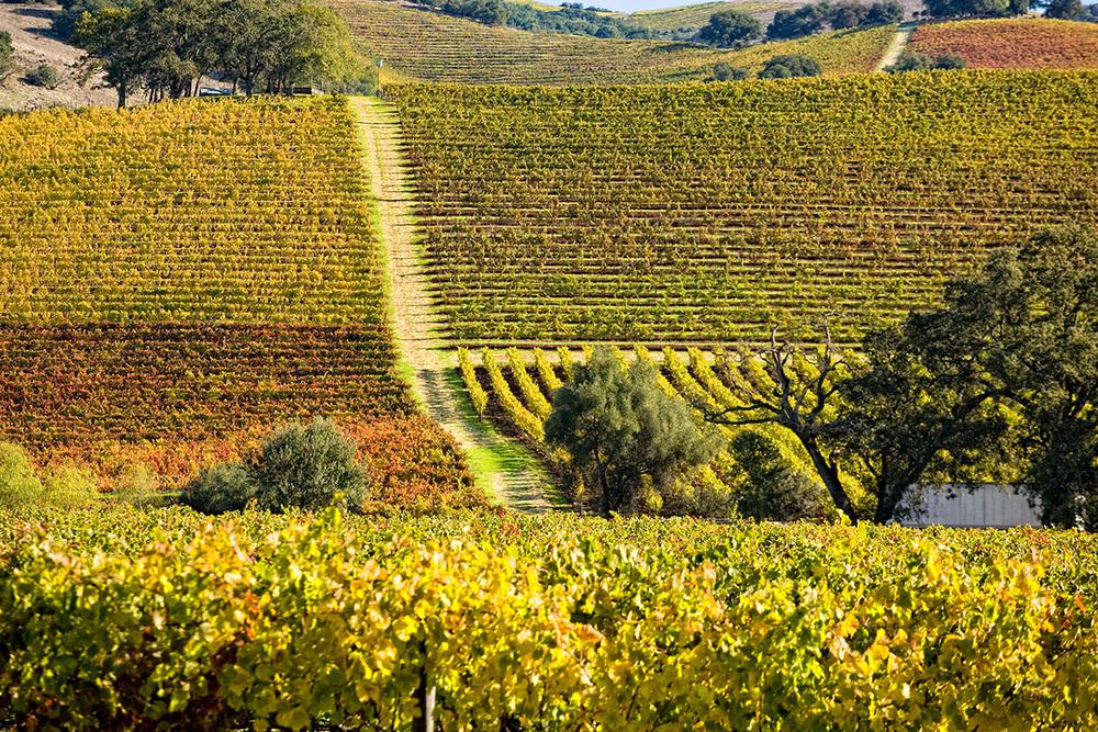 Vineyard-hill.jpg