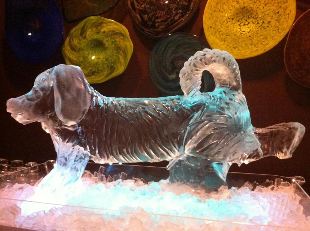 Dog shot luge