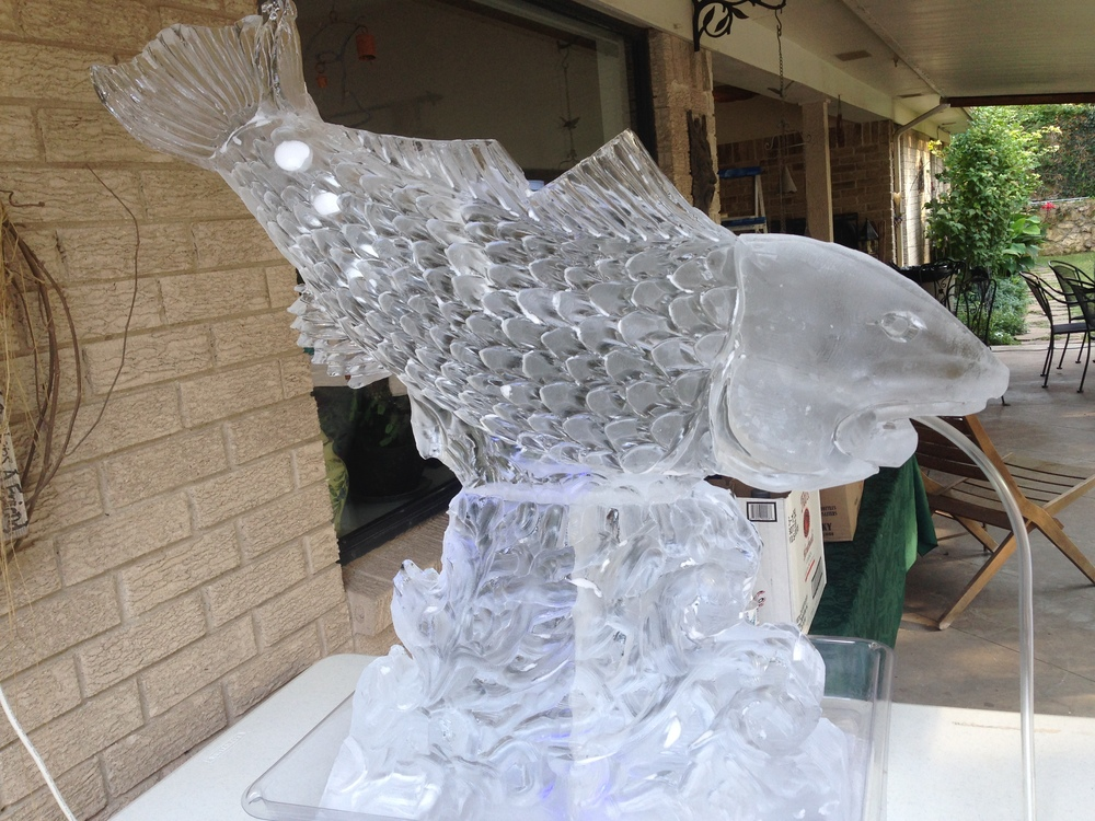 Red fish luge
