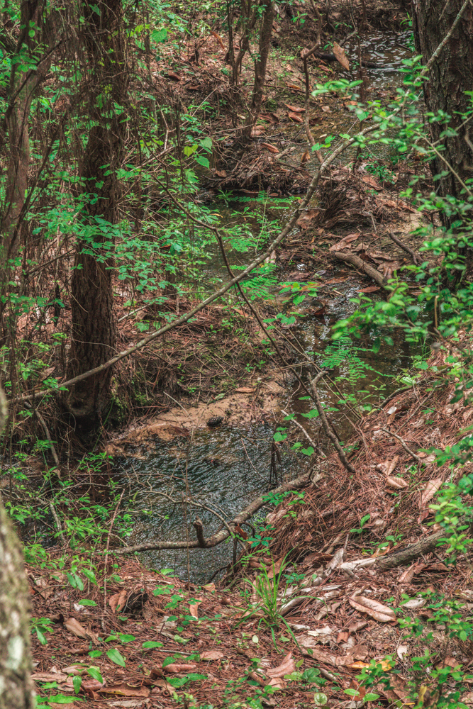 Falling Waters Park-12.jpg