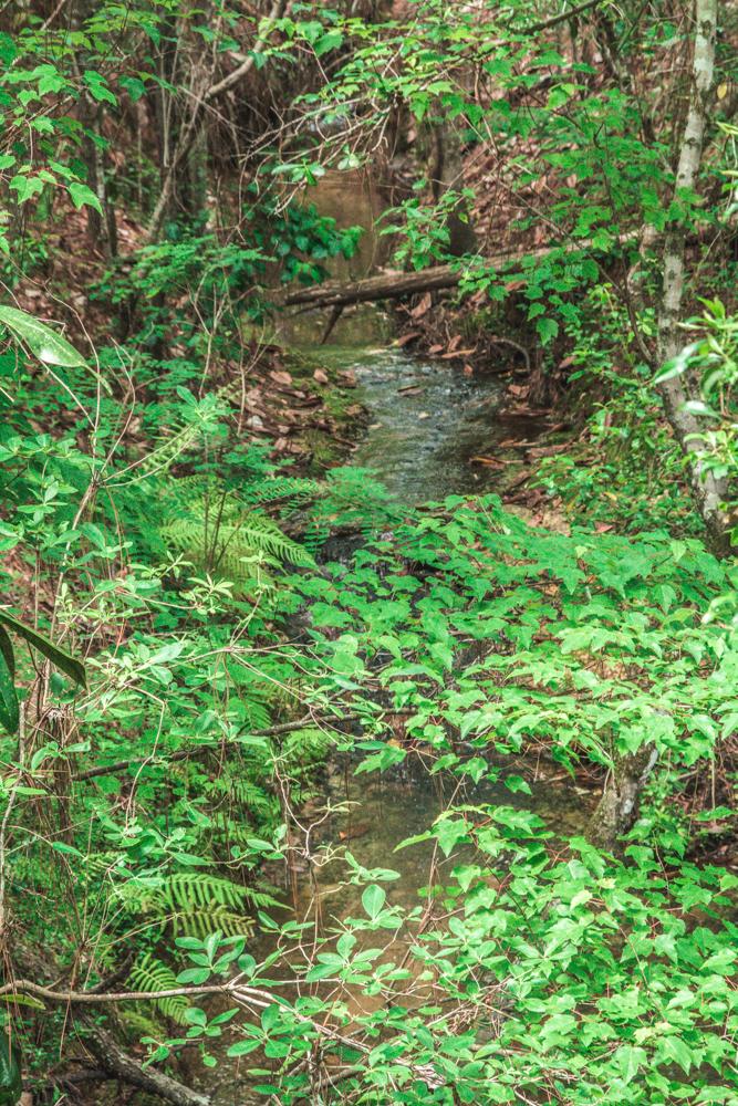 Falling Waters Park-19.jpg