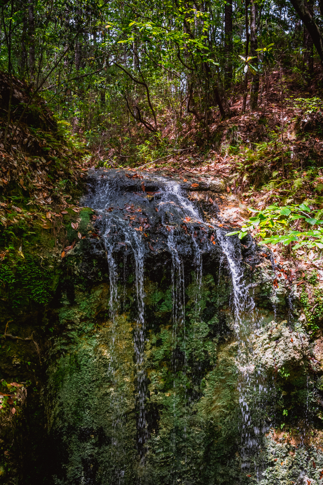 Falling Waters Park-67.jpg
