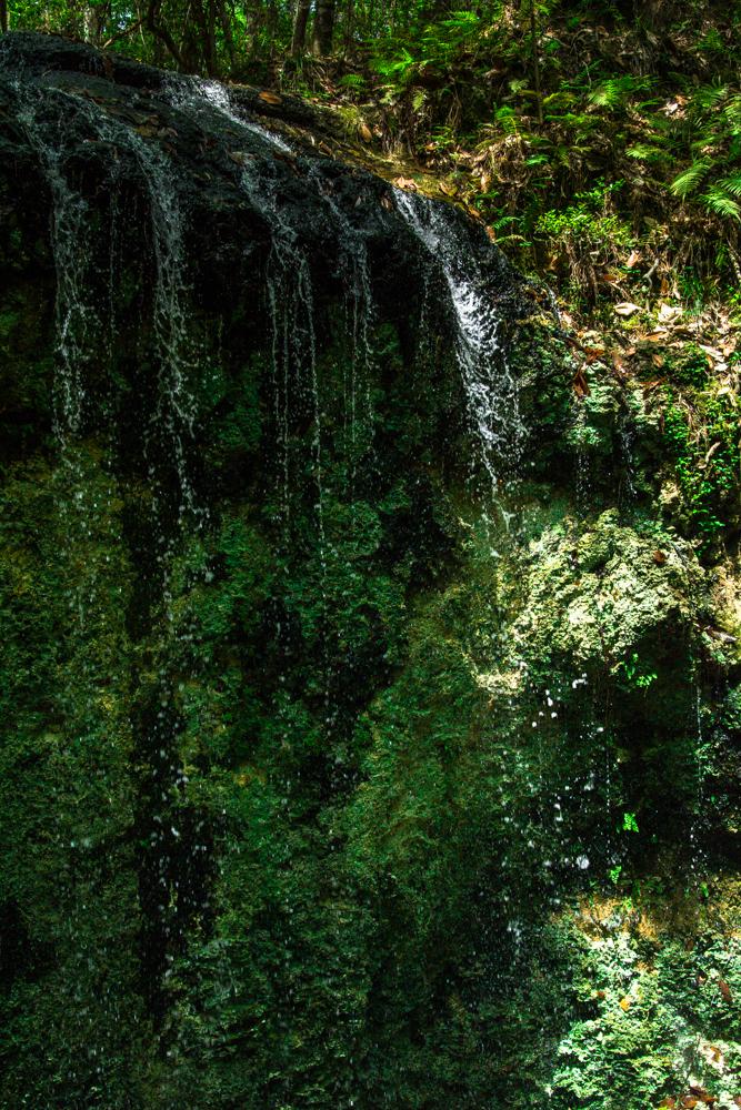 Falling Waters Park-74.jpg