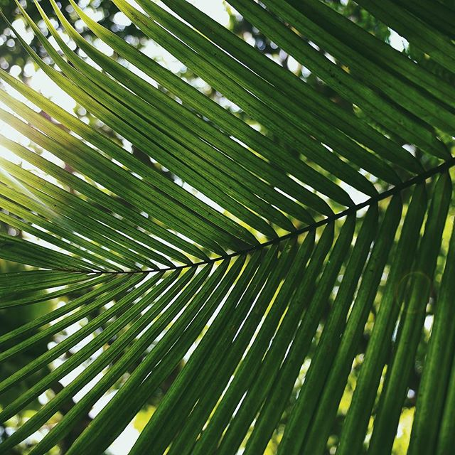 "They took palm branches and went out to meet him, shouting, ""Hosanna! Blessed is he who comes in the name of the Lord!Blessed is the king of Israel!"" #palmsunday🌿"