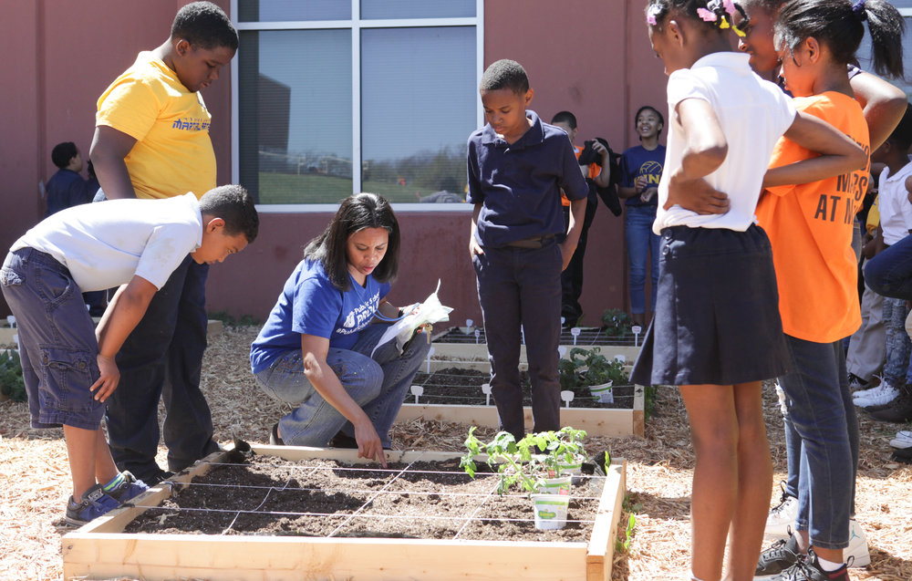 Elementary gardens - One 4x4 square foot garden bed per classroom allows students at our partner elementary schools the opportunity to engage science, grow food, & try new fruits & vegetables! Several hundred pounds of produce went home with students from the school gardens in 2018-19 & we hope to double the impact next year!