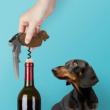 Super productive day? Yup! It's #wineoclock babes. Helped promote some pets, now let's pop a bottle. You deserve it 🍷 . . . . . . #wine #productiveday #goodday #getitdone #poppinbottles🍾 #wineglass #digitalmarketing #bosslady #marieforleo #bschool #womeninbiz #socialmediatips #digitalmarketing #femaleceo #femalehustler #dog #dogsofinstagram #dachshund #dachshundsofinstagram