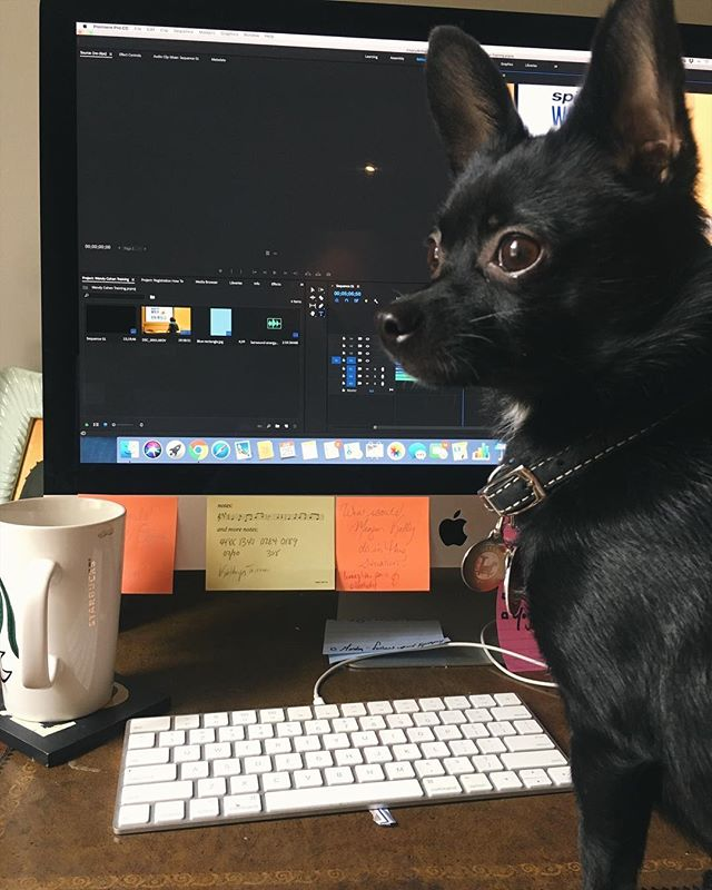 Ziggy and the other members of #TheBarketingDept are putting in some OT this weekend. Double tap for some good vibes to get us through the day! . . . . . . . . . #officesupplies #homeoffice #shopping #dogsofinstagram #chihuhua #chihuahusofinstagram #coworking #cute #shopaholic #remotework #marketing #socialmedia #workfromhome #workfromwherever #target #bosslady #barketingdepartment #nyc #newyork #blogger #blog