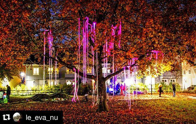 TheTree captured by @le_eva_nu in Alingsås at Lights in Alingsås.  MAGIC autumn colours. :-) #nolandtree #MakerCampLights ・・・ #nature_wizards #lightsinalingsås #alingsås #västragötaland #ig_sweden #igscandinavia #bestofscandinavia #bestoftheday #swedishmoments #LOVES_SWEDEN #love_bnw #lights #ljusialingsås2015 #travelsweden #tree #träd #what_click #visitSweden
