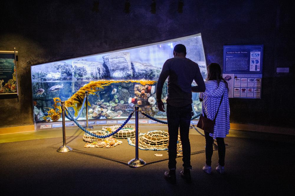 Terrain at Long Beach Aquarium