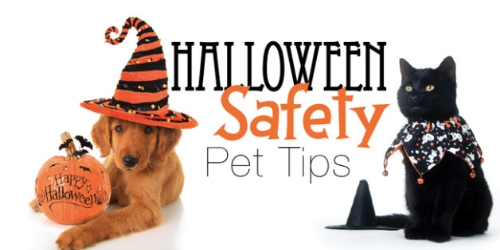 halloween-pet-safety-628x315.jpg