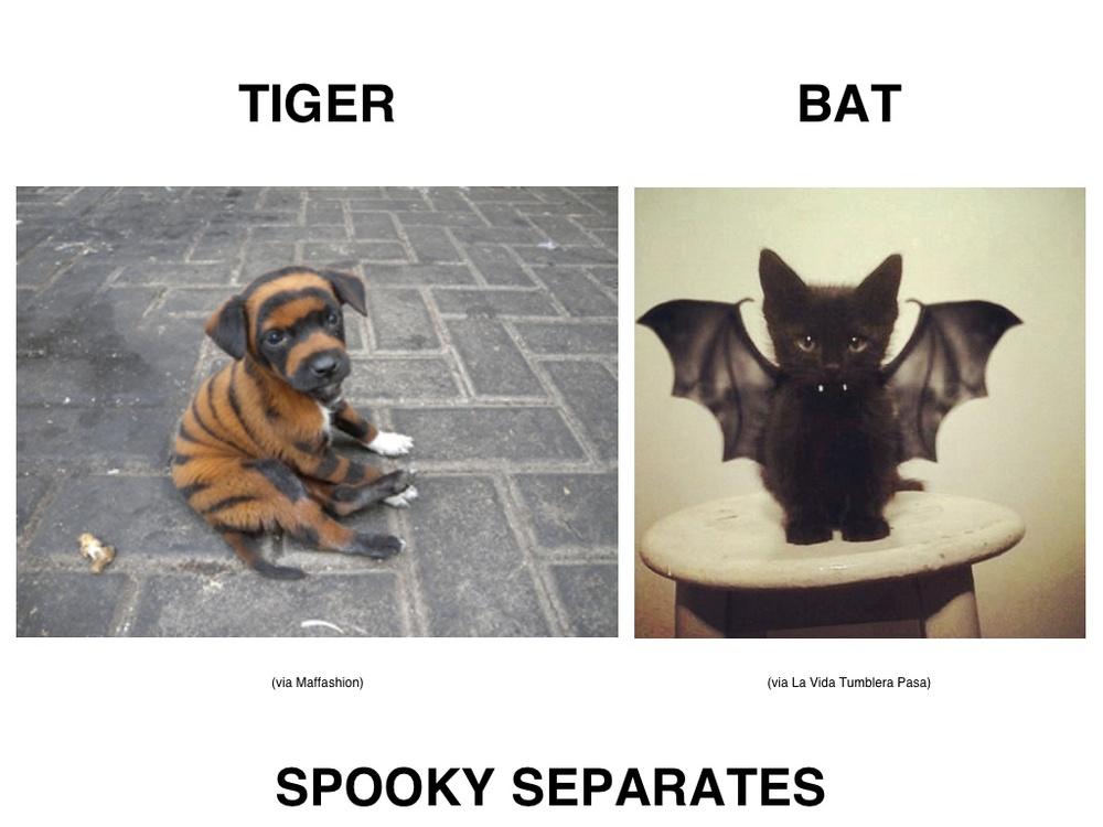 HALLOWEEN ANIMAL COSTUMES NEW.jpg