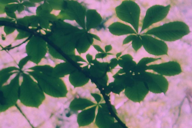3+foglieverdisusfondorosanaturalepiccola.jpg