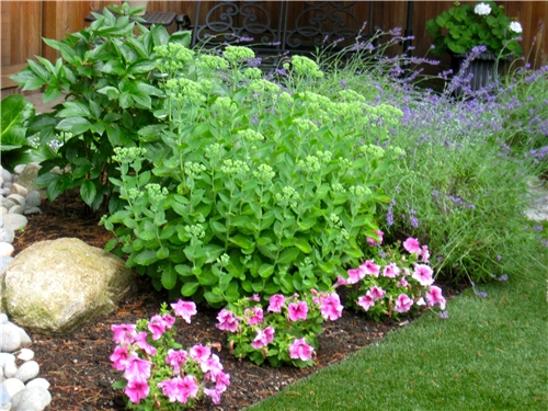plants-pink-spring-greenworks_4113.jpg
