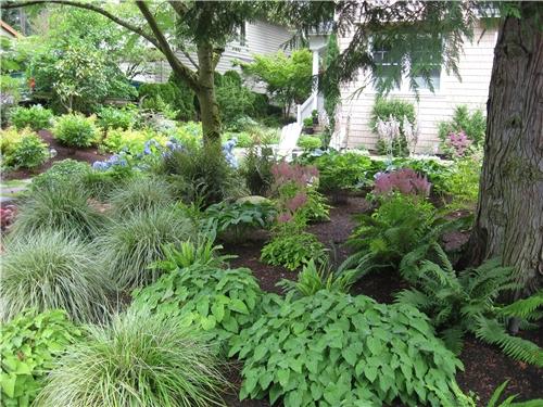 plants-woodland-ferns-spring-greenworks_3994.jpg